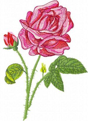 Rose Bella