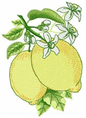 Citrons fleuris