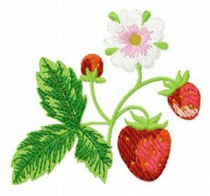 Bouquet fraises